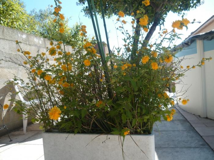 jardin,plantes,fleurs,printemps,loisirs,jardinage,cactus,arum,prunier