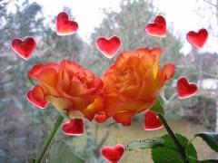 deux fleurs.jpg