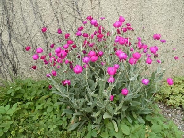 saisons,jardin,plantes,fleurs,loisirs,printemps
