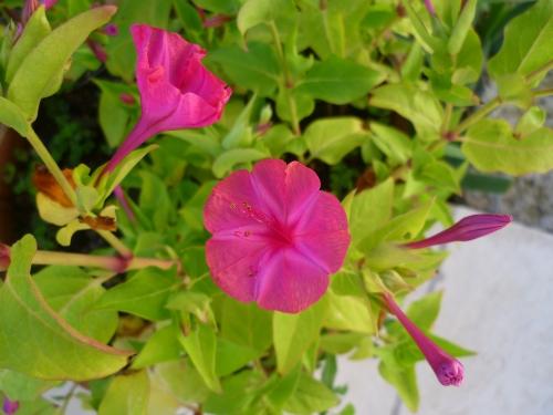fleurs,jardin,plantes,été,printemps