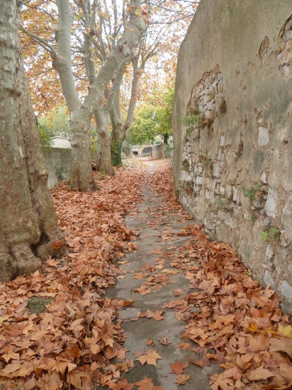 promenade,loisirs,virus,covid 19,village,fleurs,abeilles,feuilles,automne