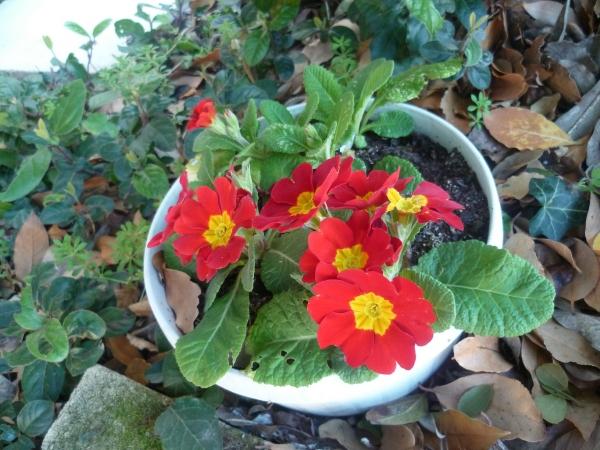 fleurs,jardin,jardinage,plantes,haies,herbe