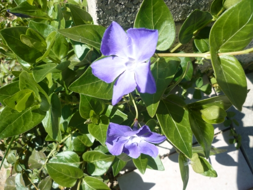 poésie,poèmes,poète,écriture,nature,été,saison