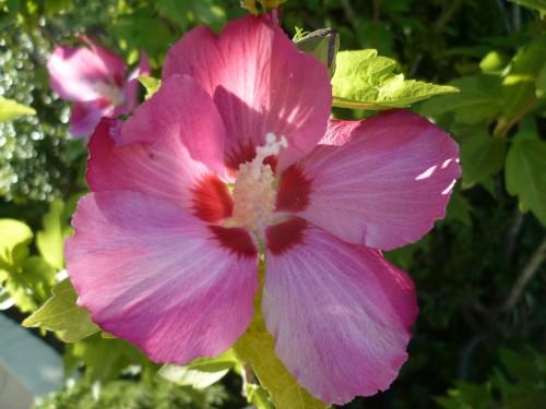 jardinage,fleurs,saisons,journal intime,écriture