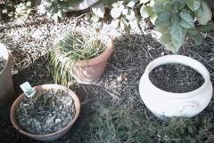 jardin,loisirs,plantes,travaux,saisons,société