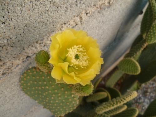 fleurs,insecte,jardin,été,papillon,saison