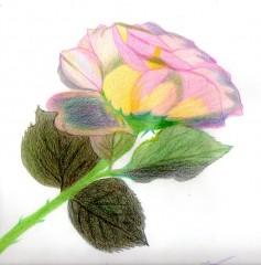 loisirs,dessin,couleurs,culture,fleurs,printemps
