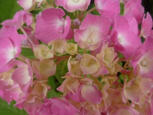 fleurs,paysages,journal intime,écriture,société,saisons