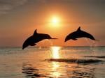 dauphin-couche-soleil.jpg
