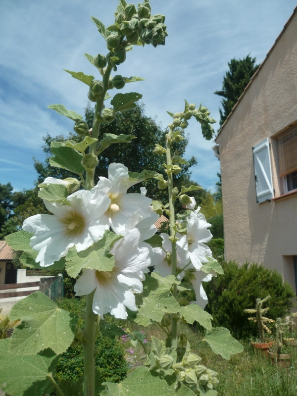 eté,jardin,saisons,fleurs,jardinage,loisirs,juin