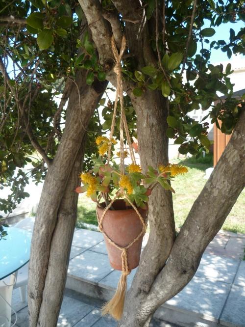 jardin,loisirs,plantes,fleurs,décoration