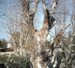 02 arbres dim (524 x 476).jpg