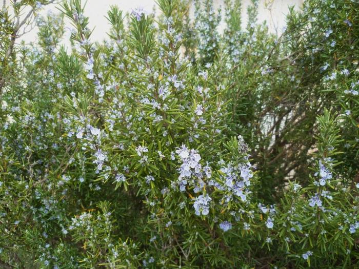 fleurs,jardin,printemps,plantes,culture,jardinage