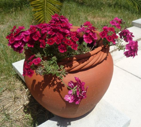 saison,jardin,fleurs,plantes,été,soleil