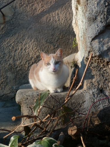 photos,animaux,chats,voyages,loisirs