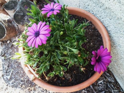 fleurs, plantes, jardin, printemps, saison, jardinage, loisirs