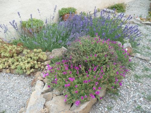 jardin,jardinage,été,chaleur,plantes,fleurs,légumes,fruits