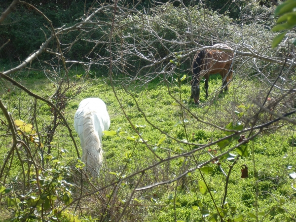 chevaux,campagne,village,animaux,jardins,herbe,printemps