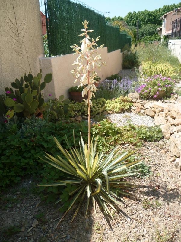 jardin,fleurs,jardinage,loisirs,plantes,plantations,photos,printemps