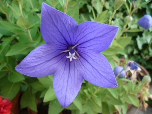 jardinage, fleurs, saisons, journal intime, écriture