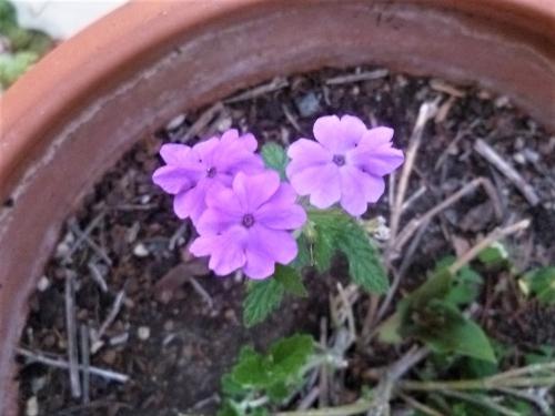 fleurs,plantes,jardin,jardinage,été,soleil saison,estival