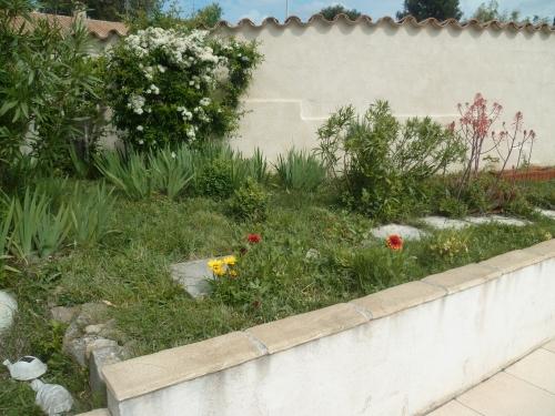 jardin,fleurs,insectes,printemps,plantes,jardinage,photos,vie sentimentale. culture