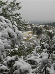 Murviel sous la neige 080110.jpg