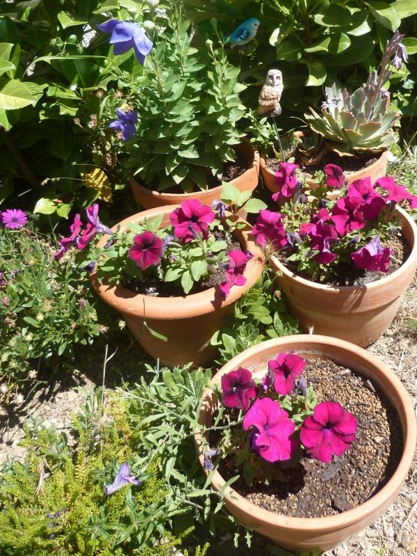 jardin,jardinage,fleurs,plantes,cactus,laurier rose,bégonia,juin,été