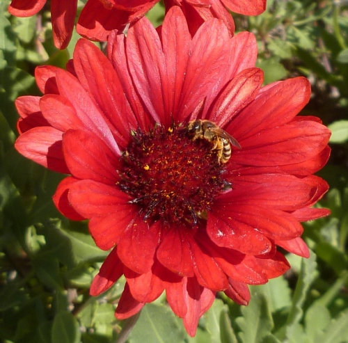 fleurs,printemps,saison,plantes,jardin,loisirs,photos