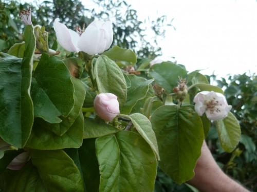saisons,fleurs,végétation,printemps,jardinage,loisirs,société