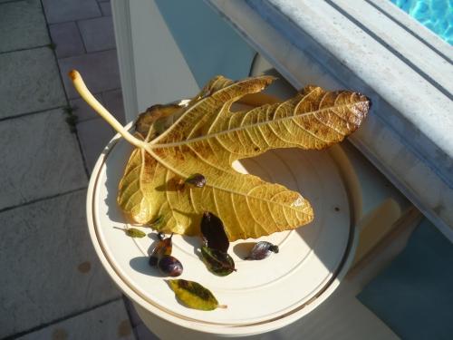 piscine,feuilles,jardin,automne,saison,novembre