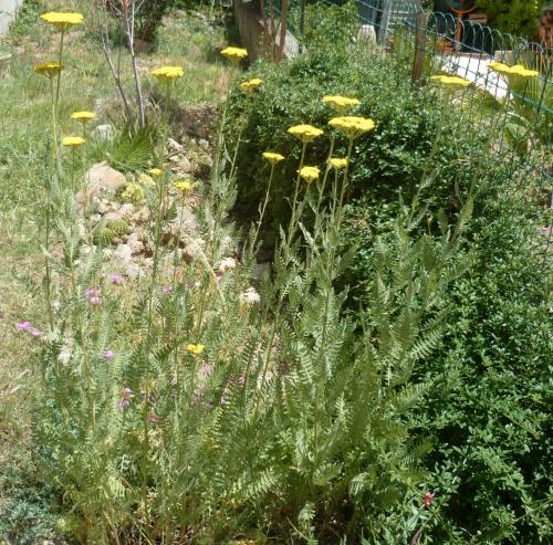 jardin,fleurs,été,printemps,jardinage,plantes