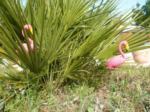 fleurs,plantes,jardin,jardinage,février,primevère,iris,jacinthe,romarin pervenche coronille