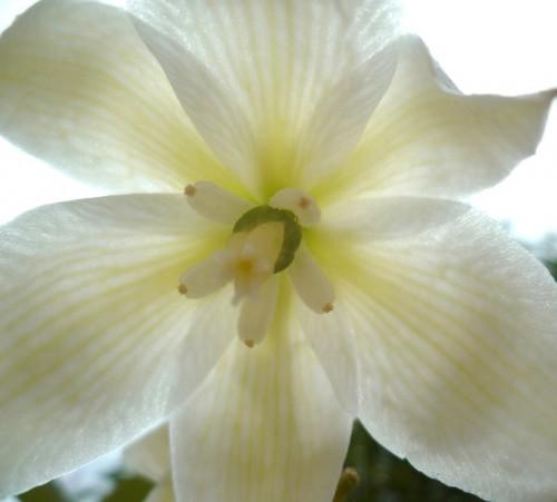 fleurs,été,photos,nouvelles et textes brefs