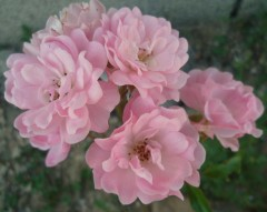 maman,mère,fête,bouquet,fleurs,blogs