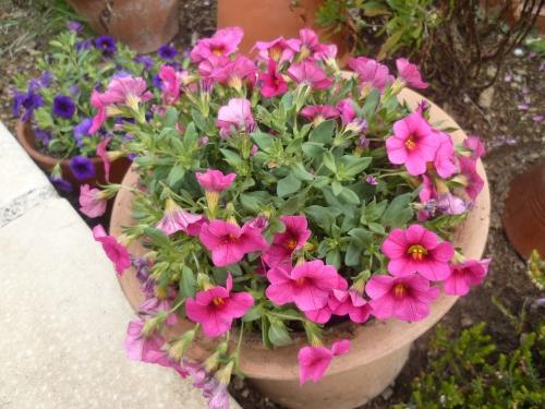 fleurs,plantes,jardin,jardinage,pots de fleurs,printemps,loisirs,gazon,arbres
