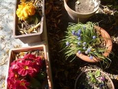 jardin,saisons,société,printemps,plantes