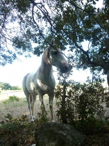 Sud, campagne, village, cheval, promenades, loisirs, société