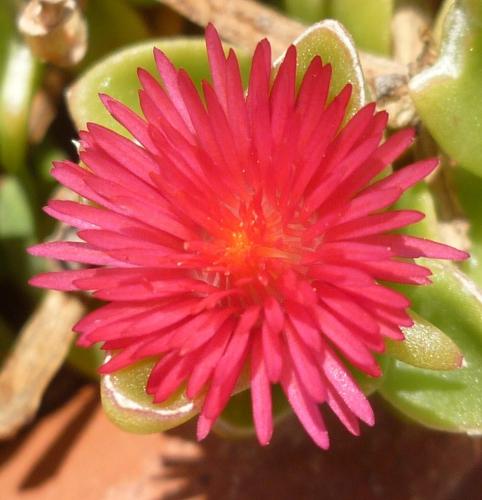 photos,jardin,fleurs,blogs,écriture,souvenirs,saisons