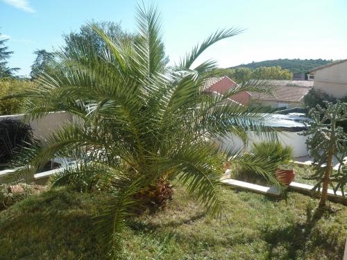 jardin,pelouse,herbe,plantes,fleurs,taille,arbres,déchets,loisirs