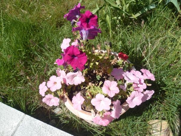 jardin,fleurs,plantes,week end,saison,été,loisirs,jardinage