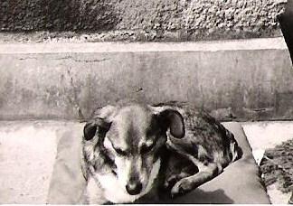 PUCCI  8 74  JPEG - Copie.jpg
