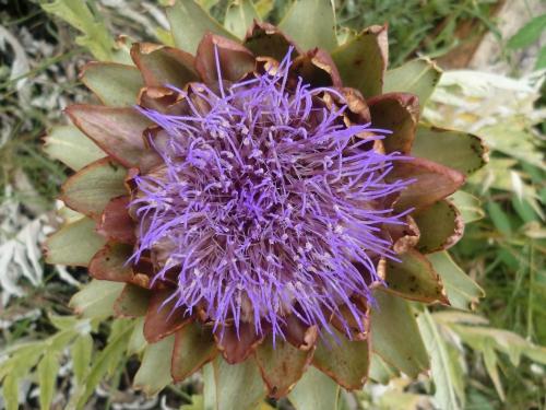 fleur,plante,photo,été,couleurs,jardin,jardinage