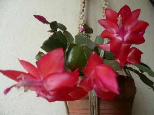 poème,poète,poésie,texte,nature,couleurs,vers,jardin