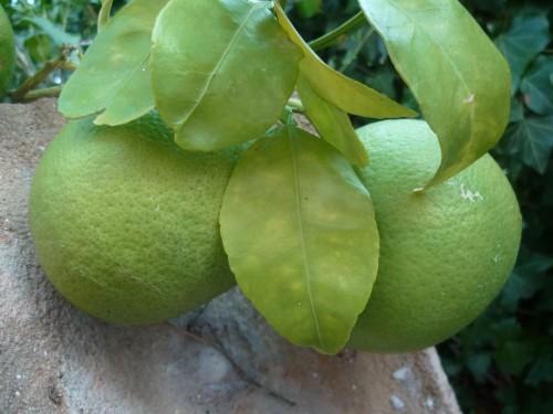 jardinage,culture,fruits,société,saison