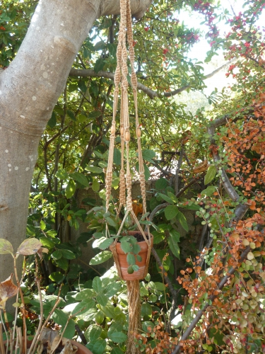 jardin,automne,travaux,fleurs,peinture,loisirs