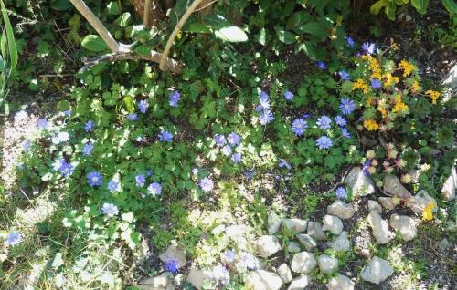 jardin,fleurs,jardinage,loisirs,saisons,printemps,société,journal intime
