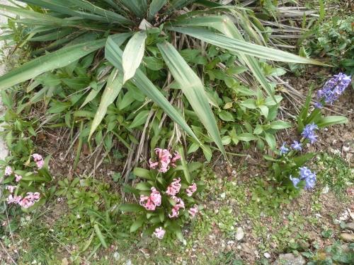 jardin,herbe,fleurs,jardinage,tondeuse