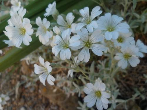 citations,proverbes,mai,fleurs,société