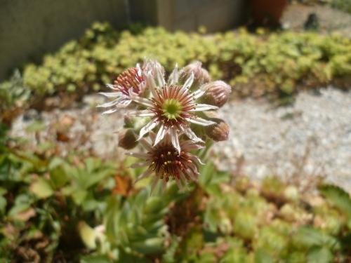 jardin,plantes,jardinage,fleurs,plantes grasses,été